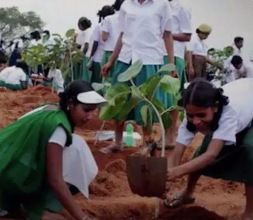 Clube Recomenda: Formas inspiradoras de reflorestamento em todo o mundo