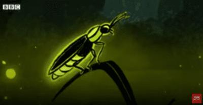 Clube Recomenda: Como os vagalumes nos ajudaram a criar lâmpadas mais brilhantes